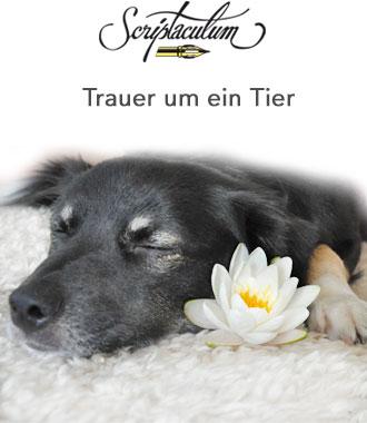 hund gestorben tröstende worte