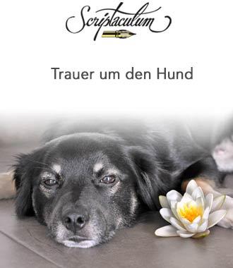 Hund tot trauer 5 Techniken